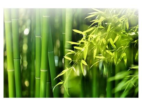 Photo de bambous