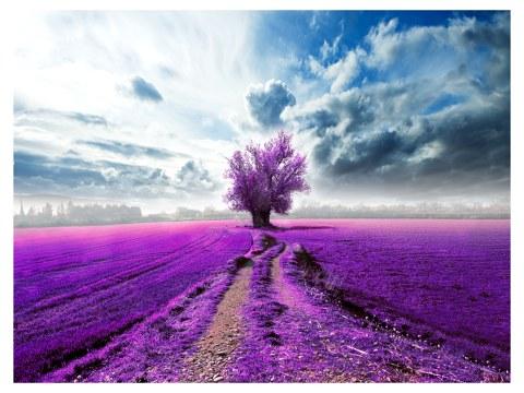 Photo d'arbre