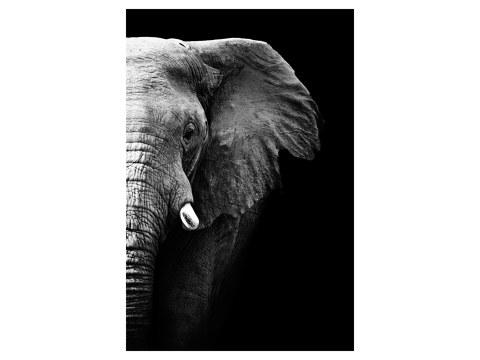 Photo éléphants