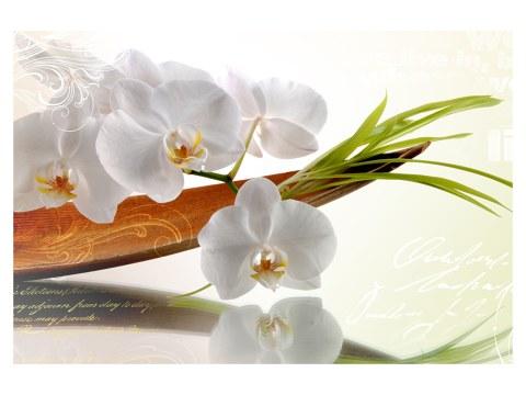 photo d'orchidées