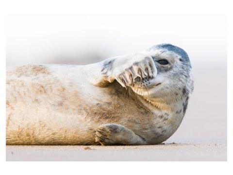 Photo de lion de mer