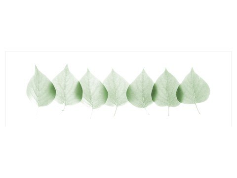 Images de feuilles