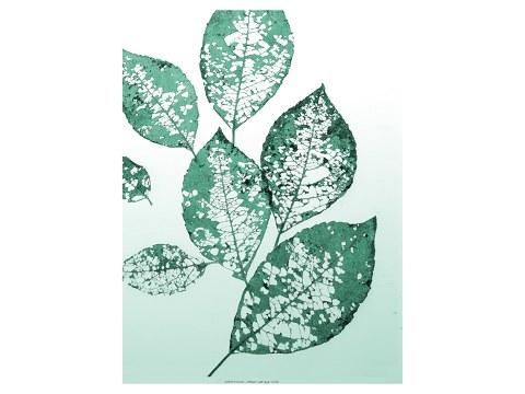 Photos de feuilles