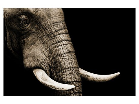 Image d'éléphant