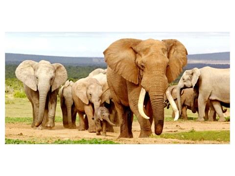 Photos d'éléphants