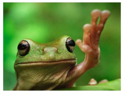 Photo de grenouille