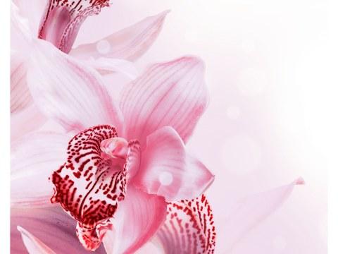 Acheter des photos d'orchidée