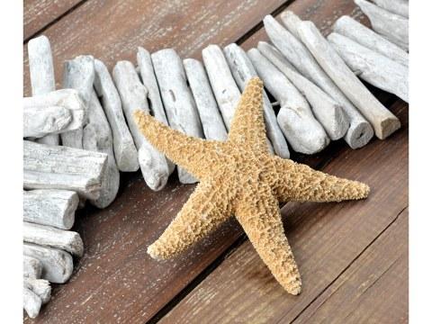 Photo d'étoile de mer