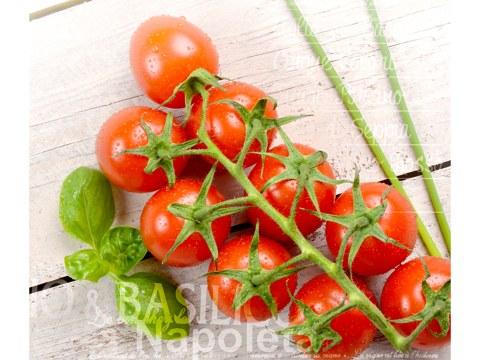Photo tomate basilic