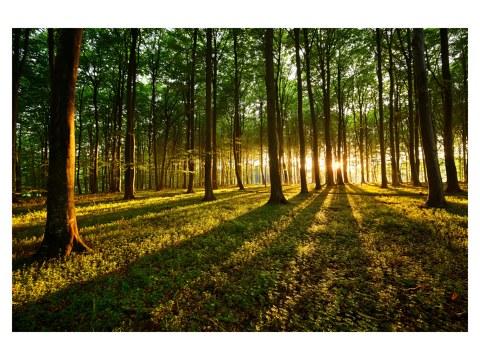 Image de la forêt