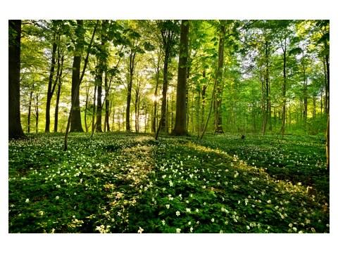 photos de forêt