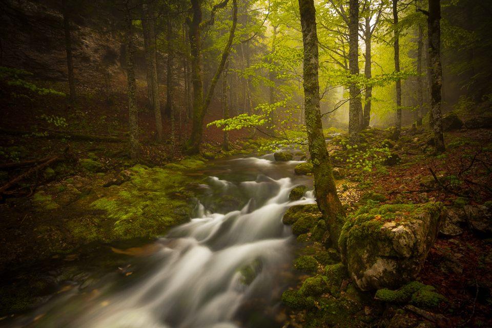 Idée photo © Vincent Favre - Fairy - Forêt montagnarde